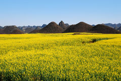 Spring colors. The photography place is the Chinese Yunnan Province Luoning County, there has planted the very big area rape, is in full bloom when the spring Stock Image