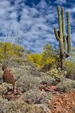 Spring Colors of the Desert Stock Image