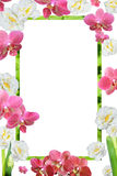 Spring colors frame of orchids and narcissuses Royalty Free Stock Photos