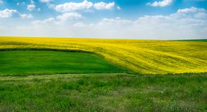 Spring colors with field. And cloudy sky royalty free stock photos