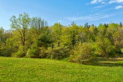 Spring Foliage along the Blue Ridge Parkway near Roanoke, Virginia royalty free stock photography