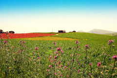 Spring colors, wild country flowers fields, Italy Royalty Free Stock Photo