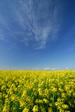 Spring colours royalty free stock photo