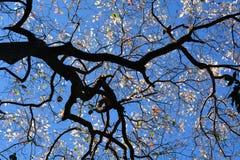 tree in spring Stock Photo
