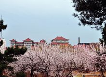 Spring comes to the ancient city Stock Photo