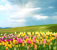 Spring is coming!. Signs of the coming spring Stock Photos