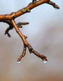 Spring coming... A spring came, nature comes back to life Royalty Free Stock Photography