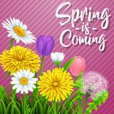 Spring is coming. Beautiful meadow flowers on striped purple background. Illustration of Spring is coming. Beautiful meadow flowers on striped purple background Stock Image