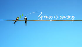 Spring is coming concept. Two swallow sitting on a wire in one branch in beak. other tweets - spring comes. cute pretty Royalty Free Stock Photos