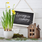 Spring is coming Royalty Free Stock Images