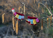 Spring coming, gloves on tree. Royalty Free Stock Images
