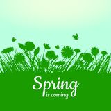 Spring is coming. Green field, flowers, sky. Camomile, grass, dandelion. Background. Vector, isolate, illustrarion. Spring is coming. Green field, flowers, sky Stock Photo