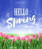 Spring is coming lettering on glade of pink tulips background. Spring bright nature illustration. Vector EPS10. Stock Photography