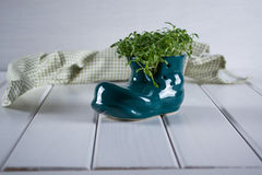 Spring is coming. Miniature boot shoe with fresh cress Royalty Free Stock Photography