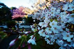 Spring is coming in New Zealand stock photography