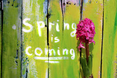 Spring is coming Royalty Free Stock Photo