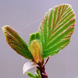 Spring is coming. Spring sunset leaves Royalty Free Stock Photography