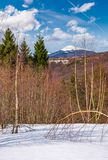 Spring is coming to snowy mountain Royalty Free Stock Photos