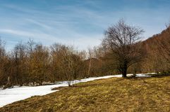 Spring is coming to snowy mountain Royalty Free Stock Photo