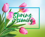 Spring is coming tulips flowers background with lettering. Vector EPS 10. Spring is coming tulips flowers background with lettering. Template for greeting card Royalty Free Stock Images