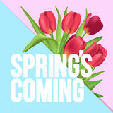Spring is coming typographic poster with red tulips bouquet. Typographic poster design with flowers Stock Images