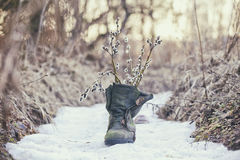 Spring is coming. Willow tree twigs bouquet in old mossy boot Stock Photos
