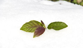 Spring is coming. Winter finishing and spring  is coming by growing plants Stock Images