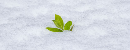 Spring is coming. Winter finishing and spring  is coming by growing plants Stock Image