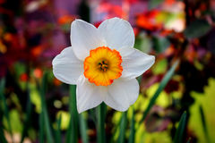 Spring is comming, the life is back Royalty Free Stock Photo