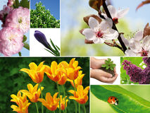 Spring composition royalty free stock image
