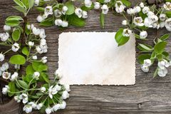 Spring composition with blooming branches of pears  tree Stock Images