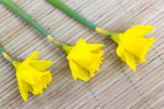 Spring composition of daffodil flowers. Photo shows a composition of jonquil flowers on wooden background royalty free stock image
