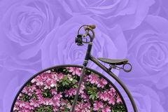 Spring concept: antique bicycle with flowers on hoops Royalty Free Stock Photos