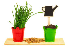 Spring concept with grass, soil, seeds in the buckets Stock Photos