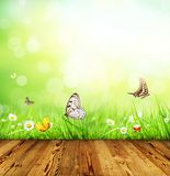 Spring concept with wooden planks Stock Photos
