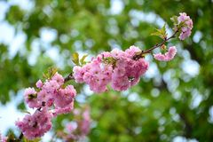 Spring contrasts Royalty Free Stock Photo