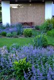 Spring cottage garden. With blue nepeta stock photo