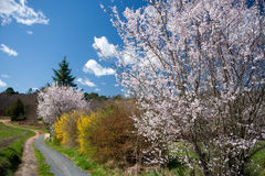 Spring country lane Stock Photo