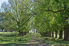 Spring country road Royalty Free Stock Images