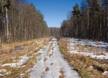 Spring country road with melting snow in forest Royalty Free Stock Photos