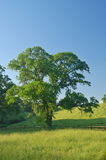 Spring countryside Stock Photography