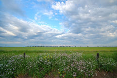 Spring countryside Royalty Free Stock Photo