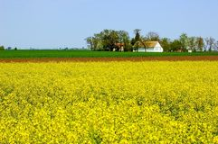 Spring Countryside Royalty Free Stock Images