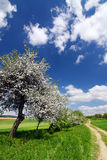 Spring countryside with blooming trees Stock Photo