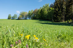 Spring countryside with flowers, meadow, trees and blue sky Royalty Free Stock Photography