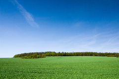 Spring countryside with green field, forest and blue sky Stock Photography