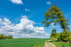 Spring countryside with green field, road and blue sky Stock Photography