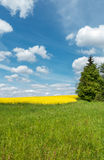 Spring countryside with green meadow and yellow blooming rapesee Stock Photography