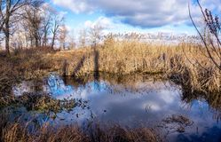 Spring countryside landscape. The flood meadow in early spring Stock Photo
