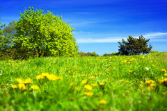 Spring countryside, meadow with green grass, trees and flowers. Stock Photo